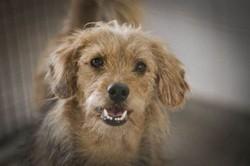 Agora é lei: animais não podem mais ser sacrificados pelas zoonoses (crédito: Breno Esaki)
