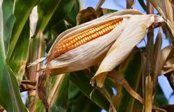 Zoneamento agrícola de risco climático é publicado para Norte e Nordeste