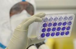 Infecções prévias podem gerar células que combatem o novo coronavírus, diz estudo (Foto: Jean-François Monier/AFP)