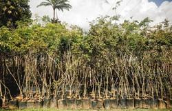 Jardim Botânico do Recife abre viveiro florestal para visitação  (Divulgação )