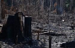 Governo demite coordenadora do Inpe responsável por monitorar desmatamento (Foto: Arquivo/Agência Brasil)