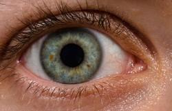 Cientistas australianos criam olho biônico com técnica pioneira (Foto: ROTFLOLEB/Wikimedia)