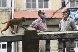 Milhares de macacos aterrorizam cidade turística indiana (Foto: Money SHARMA / AFP)
