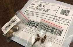 Agricultura investiga sementes misteriosas da China enviadas a brasileiros (Foto: Gabriel Zapella/Arquivo pessoal)