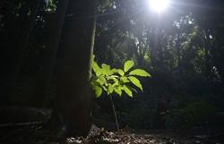 G20: Brasil vai priorizar temas como saúde, tecnologia e meio ambiente (Foto: Tânia Rêgo/Agência Brasil)