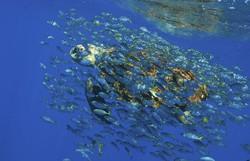 Cientistas de 33 países lançam campanha a favor de ciências oceânicas antes da COP26 (Foto: Divulgação/Projeto Tamar)