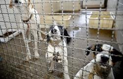 Adoção e abandono de animais domésticos aumentam durante a pandemia (Foto: Fábio Pozzebom/ Agência Brasil)