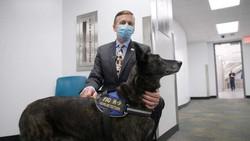 Cães têm eficácia de 99% em detectar novo coronavírus no Aeroporto de Miami
