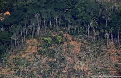 Brasil busca ajuda de US$ 1 bi para redução do desmatamento, diz Salles (Foto: Carl de Souza/AFP)