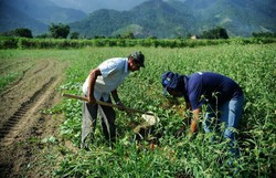 Custo da produção da cana-de-açúcar em Pernambuco aumenta (Foto: Tomaz Silva / Agência Brasil)