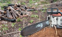 Aplicativo permite denúncias de crimes ambientais na Amazônia (Foto: Arquivo / Agência Brasil)