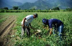 Novo fundo vai destinar US$ 68 milhões para agricultura sustentável no Brasil (Foto: Tomaz Silva/Agência Brasil )