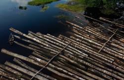 UE é segundo maior responsável por desmatamento relacionado ao comércio internacional, aponta WWF (Foto: Ricardo Oliveira/AFP )