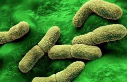 China adota medidas de saúde após caso de peste bubônica na Mongólia (Foto: Divulgação/Science)