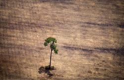 Desmatamento da Amazônia cresce 34% de agosto de 2019 a julho de 2020 (Foto: Raphael Alves/AFP)
