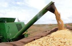 Ipea: setor agropecuário pode crescer até 2,5% apesar da Covid-19 (Foto: Arquivo/Agência Brasil)