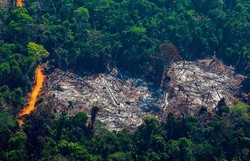 Em 18 anos, Amazônia perdeu área maior que estado de São Paulo, aponta IBGE (Foto: AFP )