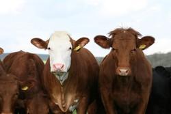 Argentina suspende exportações de carne bovina por 30 dias (Foto: Reprodução/Pixabay)