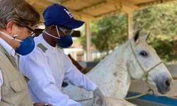 Soros produzidos por cavalos têm anticorpos potentes para Covid-19 (Foto: Instituto Vital Brasil / Divulgação)