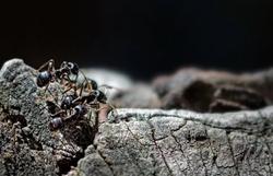 Pesquisadores da UFPR descobrem mais quatro espécies de formiga (Foto: Pixabay)