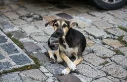 Animais de rua também precisam de ajuda durante a pandemia (Foto: Bruna Costa/DP)