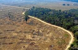 Em 18 anos, desmatamento no Brasil atinge área equivalente à da Espanha (Foto: Carlos Fabal / AFP)