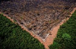 Desmatamento da Amazônia sobe 9,5% e atinge 11 mil km2 (Foto; Divulgação/Ibama)