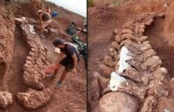 Dinossauro encontrado na Argentina pode ser o maior conhecido (Foto: AFP)