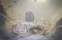 Dengue pode fornecer anticorpos contra Covid-19, aponta pesquisa brasileira (Foto: Léo Malafaia/Arquivo DP)