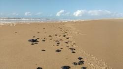 Governo cria comissão para monitorar poluição marítima (Foto: Ibama / Divulgação)