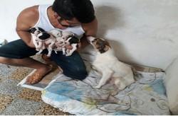 Casa de Passagem pede ajuda para continuar cuidando de animais (Cortesia/WhatsApp )