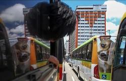 Motoristas e cobradores realizam ato no Centro do Recife (Leandro de Santana/Esp.DP)