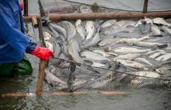 Pescadores devem se recadastrar em sistema online de regstro da atividade  (Foto: Istock/Mapa)