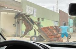 Burro fica suspenso em carroça com excesso de peso em Juazeiro do Norte (Foto: Divulgação)