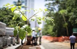 Obras do Parque das Graças recebeu primeiras mudas de árvores a serem plantadas (Prefeito João Campos vistoriou o local nesta sexta-feira (22), durante plantio das primeiras árvores do novo parque da cidade. Foto: Rodolfo Loepert/PCR)