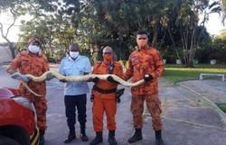 Cobra píton de 3m é resgatada em telhado de casa em Fortaleza (Foto: Corpo de Bombeiros/divulgação)