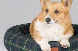 Rainha Elizabeth II lança linha de brinquedos e roupas para cachorros
