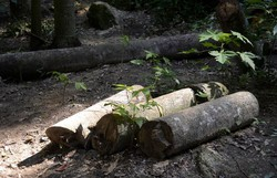 Perda de florestas mais velhas reduz diversidade da Mata Atlântica (Foto: Tânia Rêgo/Agência Brasil )