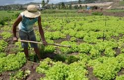 Secretários apresentam propostas emergenciais de apoio à agricultura familiar (Foto: Josué da Mata/SDA)