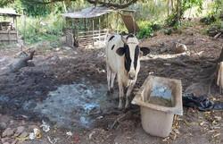 Comerciantes recebem multa de R$ 89 mil  por atividade irregular de abate de animais e  venda ilegal de madeira   (CPRH/Divulgação)