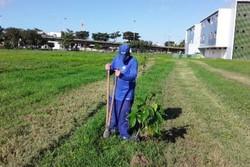 UFPE erradica cinco árvores e planta outras 40 no campus Recife (Foto: UFPE/Divulgação)