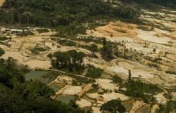Ministério da Defesa reinicia operações em terra indígena no Pará (Foto: Divulgação/Greenpeace)