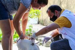 Campanha de vacinação antirrábica passa a ter postos fixos em Olinda (Sandy James/DP)
