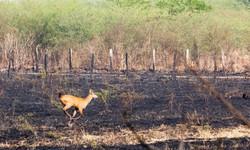 Engajamento da população é vital para evitar incêndio na natureza (Foto: Chico Ribeiro / Governo do Mato Grosso)