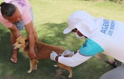 Cabo pretende vacinar 6 mil cães e gatos em 96 áreas da zona rual (Divulgação )