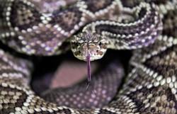 Adolescente é picado oito vezes em um mês pela mesma cobra (Foto: Carl de Souza/AFP)