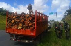 CPRH apreende 154 toras de madeira nativa e emite multa de R$ 8,9 mil por transporte ilegal (Foto: Divulgação/CPRH.)