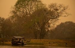Pantanal pode levar até 50 anos para se recuperar de queimadas (Foto: Mauro Pimentel/AFP)