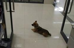 Cão espera dono em hospital por quase três meses; homem morreu da Covid-19 no quinto dia (Foto: Reprodução/Twitter)