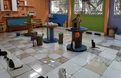 Técnica em enfermagem pede doações para manter gatil no Ulysses Pernambucano (Cortesia/WhatsApp )
